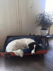 Industriële Stoere Hondenmand Indusigns Amsterdam