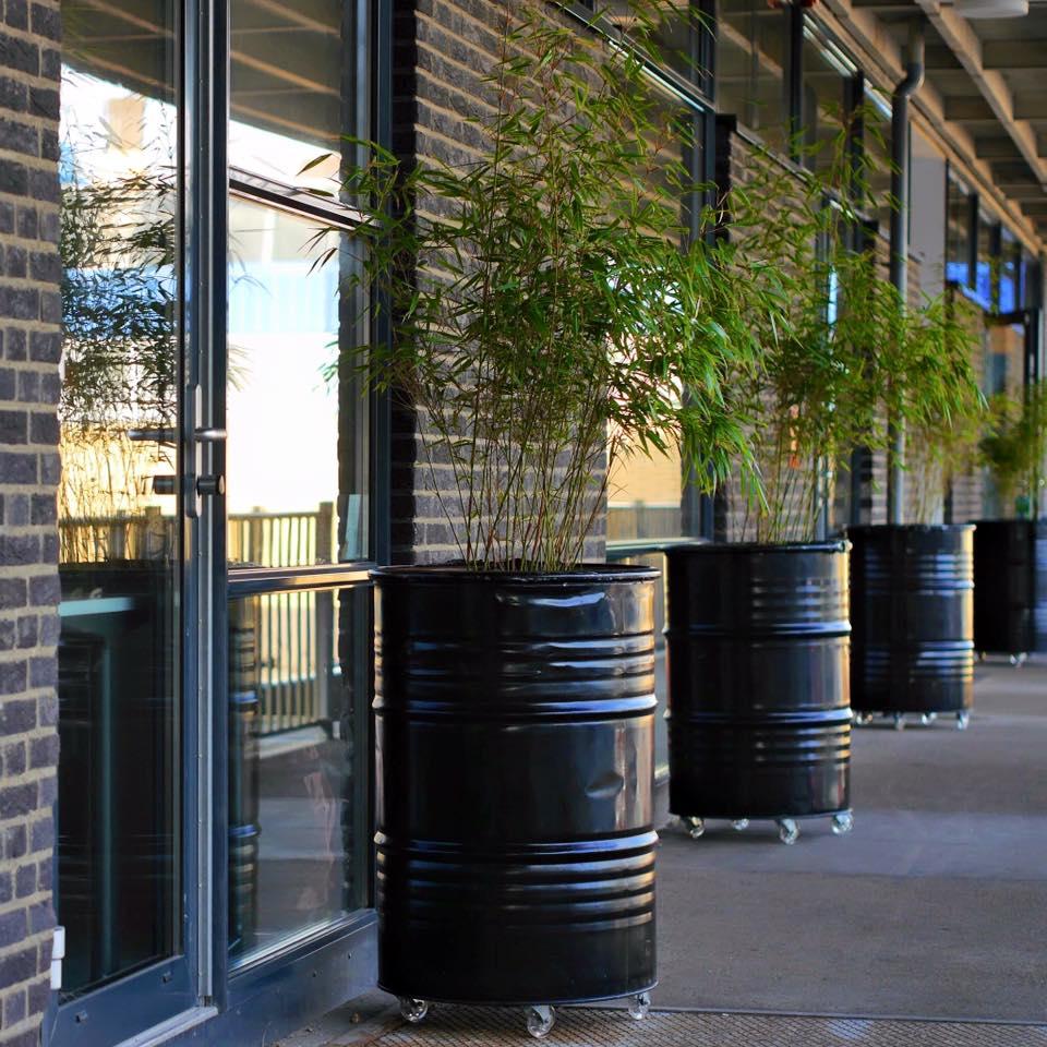 Industriële plantenbakken van olievaten.