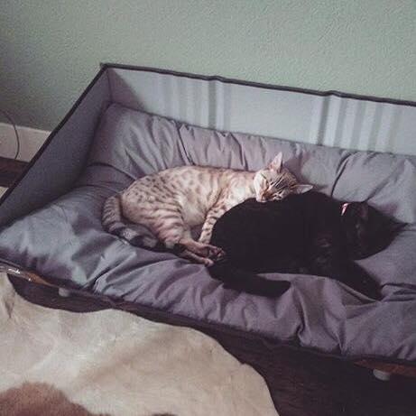 Stoere Kattenmand