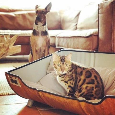 Stoere Kattenmand Indusigns Olievat