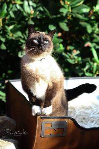 Kattenmand Indusigns Olievat