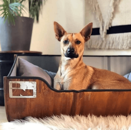 Stoere Hondenmand